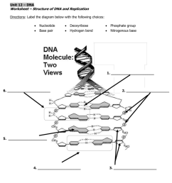label the diagram of dna nucleotide and basis [ 791 x 1024 Pixel ]