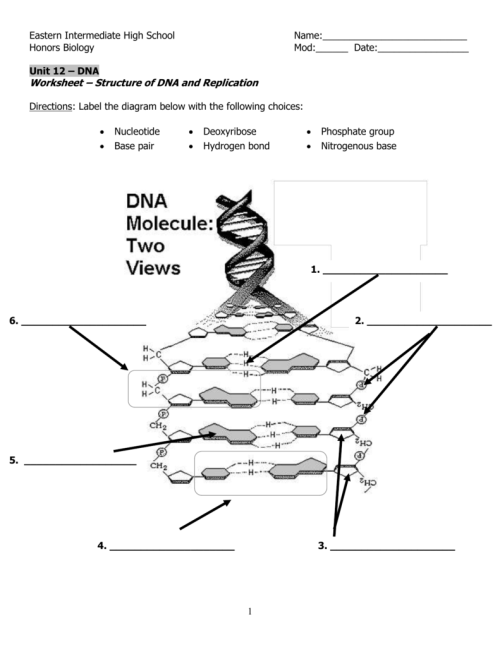 small resolution of label the diagram of dna nucleotide and basis