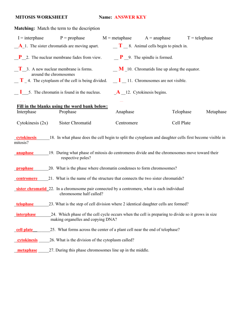 hight resolution of mitosis worksheet name answer key matching match the term to the description d metaphase e anaphase a i prophase interphase b interphase p prophase