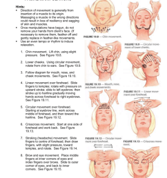 facial manipulations hints direction of movement is generally from insertion of a muscle to its origin massaging a muscle in the wrong directions  [ 791 x 1024 Pixel ]