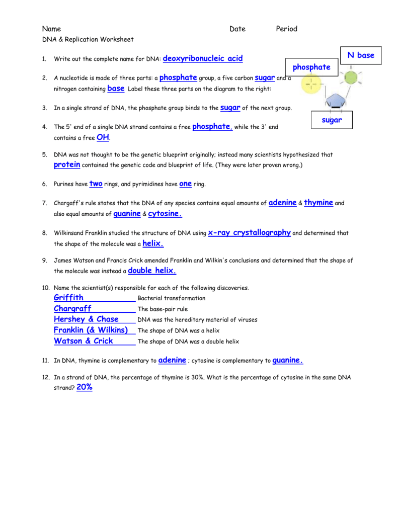hight resolution of name date period dna replication worksheet 1 write out the complete name for dna 2 a nucleotide is made of three parts a nitrogen containing base