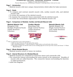 anatomy review skeletal muscle tissue graphics are used with permission of pearson education inc publishing as benjamin cummings http www aw bc com  [ 791 x 1024 Pixel ]