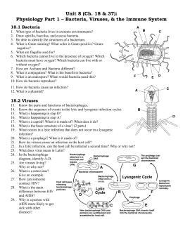 Viruses Worksheet