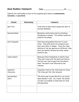 Symbiotic Relationships Worksheet Good Bud S Barnacle