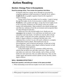 Energy Flow In An Ecosystem Worksheet - Worksheet List [ 1024 x 791 Pixel ]