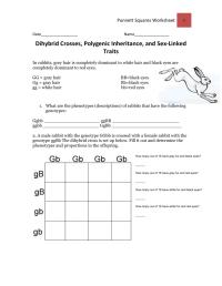 worksheet. Dihybrid Crosses Worksheet. Worksheet Fun ...