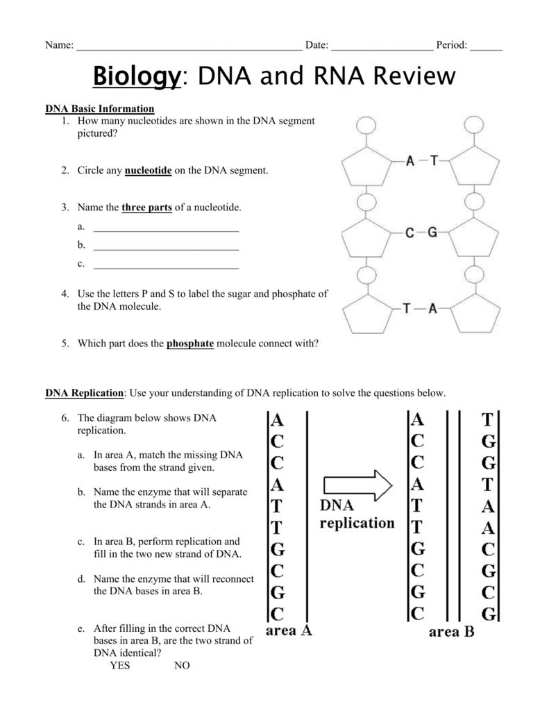 medium resolution of dna nucleotide and basis diagram