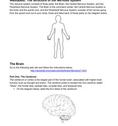 label nerve diagram [ 791 x 1024 Pixel ]