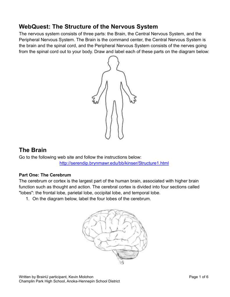 hight resolution of label nerve diagram
