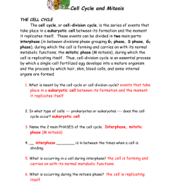 cell cycle diagram with answer [ 791 x 1024 Pixel ]