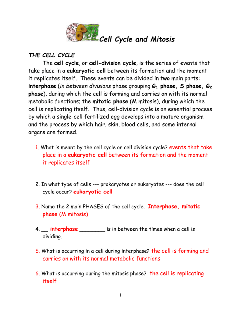 medium resolution of cell cycle diagram with answer