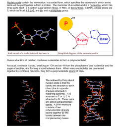 complimentary dna base diagram [ 791 x 1024 Pixel ]