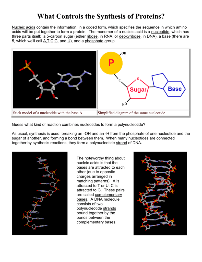 hight resolution of complimentary dna base diagram