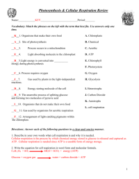 Pictures Respiration Worksheet Answers