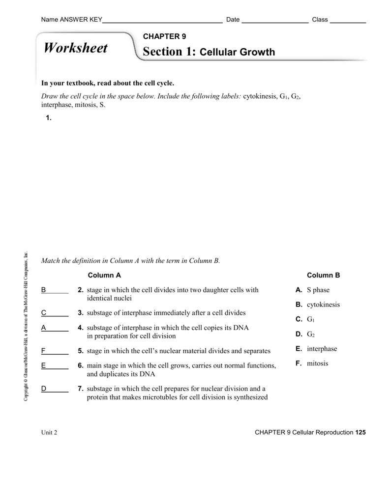worksheet. Cell Growth And Division Worksheet. Worksheet