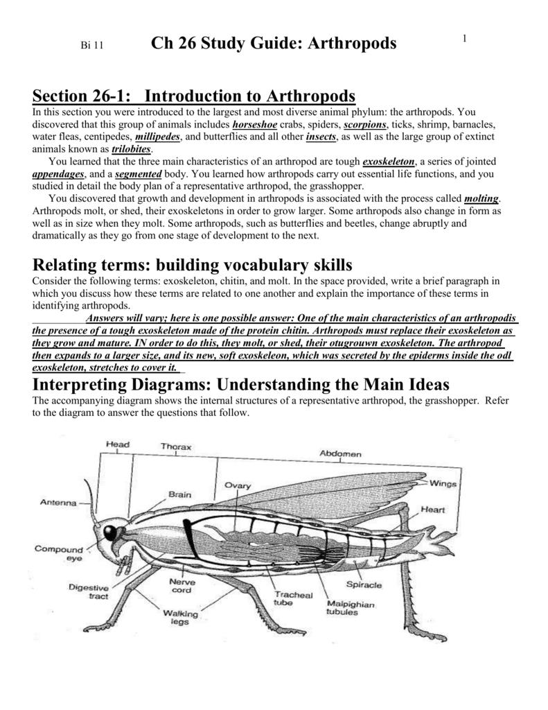 hight resolution of arthropoda diagram