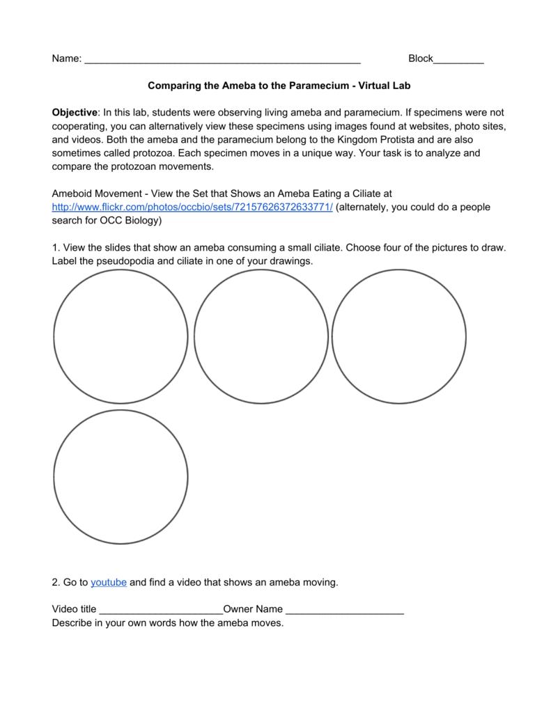 hight resolution of diagram of paramecium