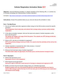 Cellular Respiration Worksheet Answer Key ...