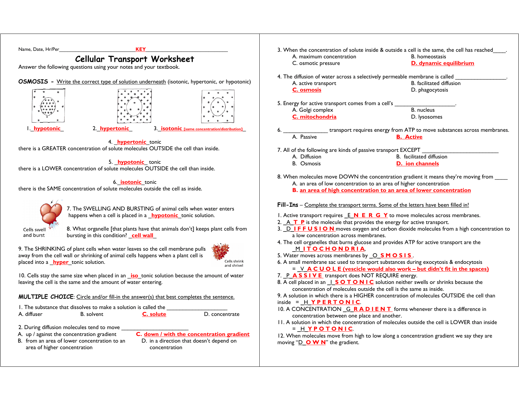 Worksheet Cellular Transport Worksheet Answer Key Grass Fedjp Worksheet Study Site