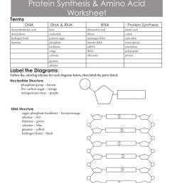 dna translation diagram ribosome [ 791 x 1024 Pixel ]