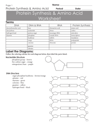 worksheet. Dna And Protein Synthesis Worksheet. Grass ...