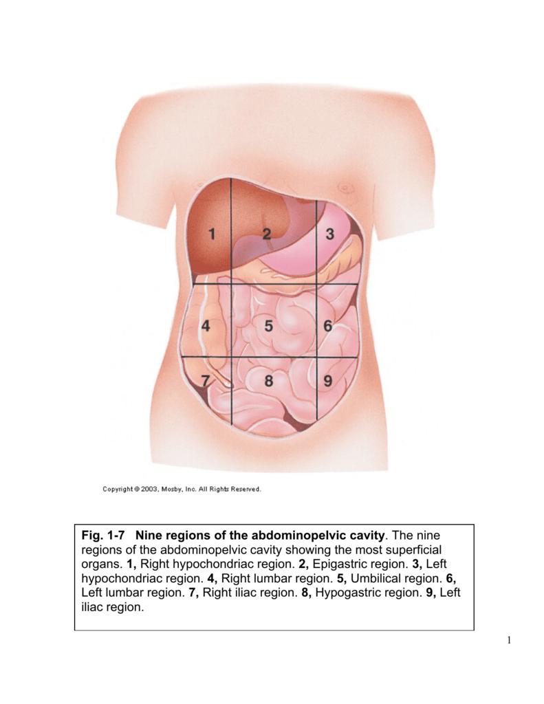 medium resolution of 1 7 nine regions of the abdominopelvic cavity the nine