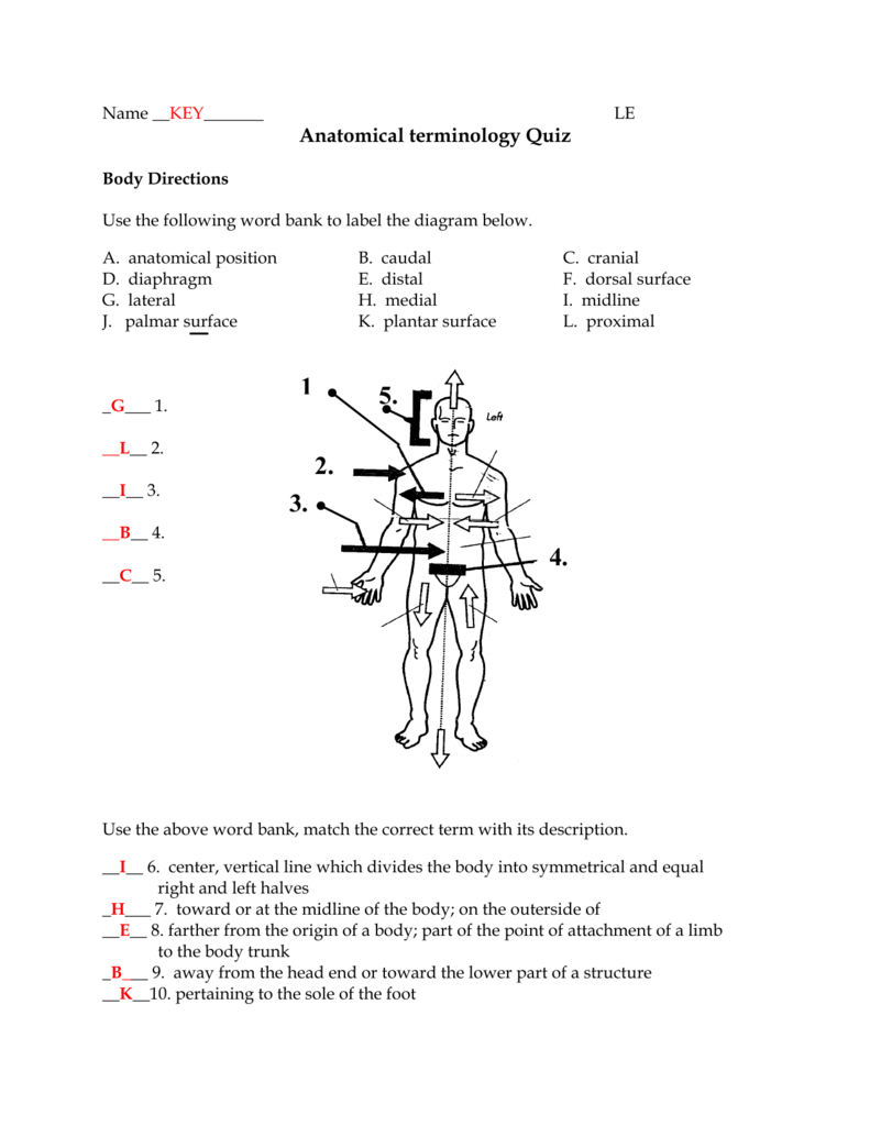 medium resolution of name key le anatomical terminology quiz body directions use the following word bank to label the diagram below a d g j anatomical position