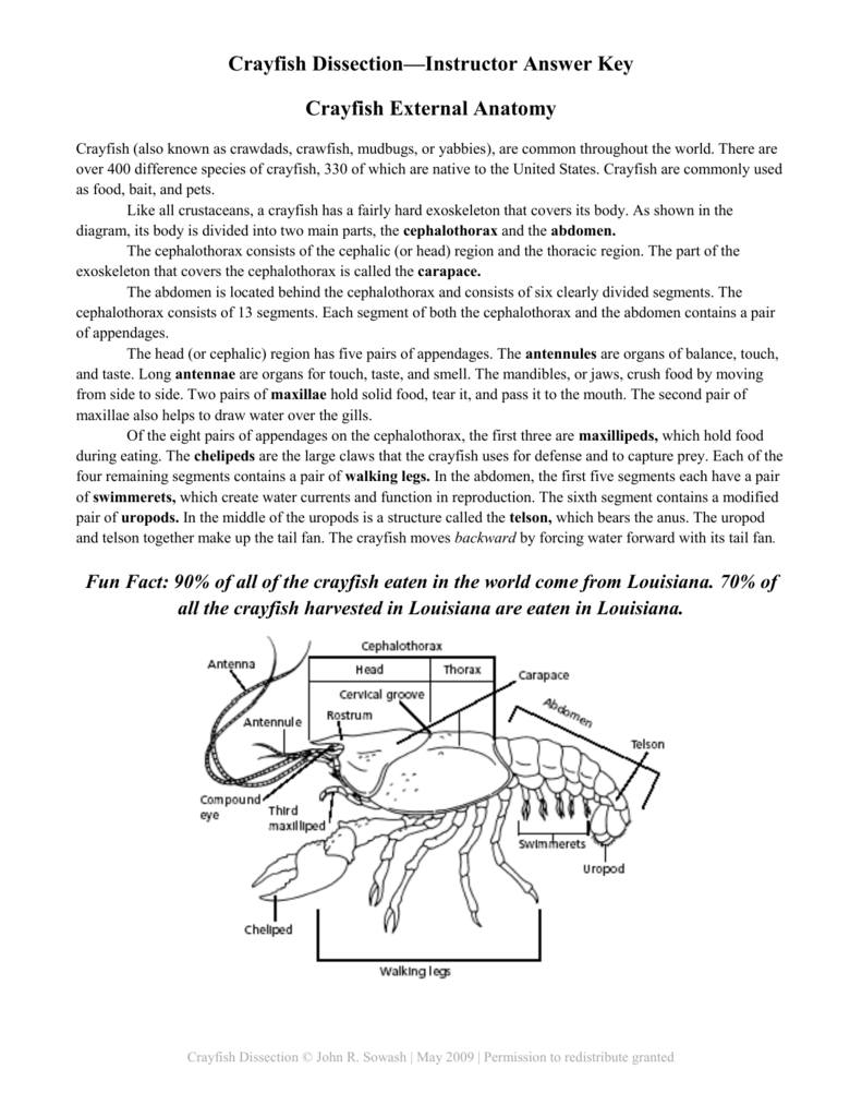 hight resolution of crayfish diagram labeled