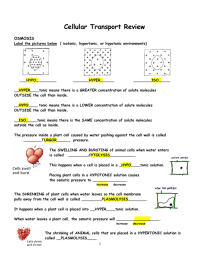 Cellular Transport Worksheet Answer Key Worksheets For