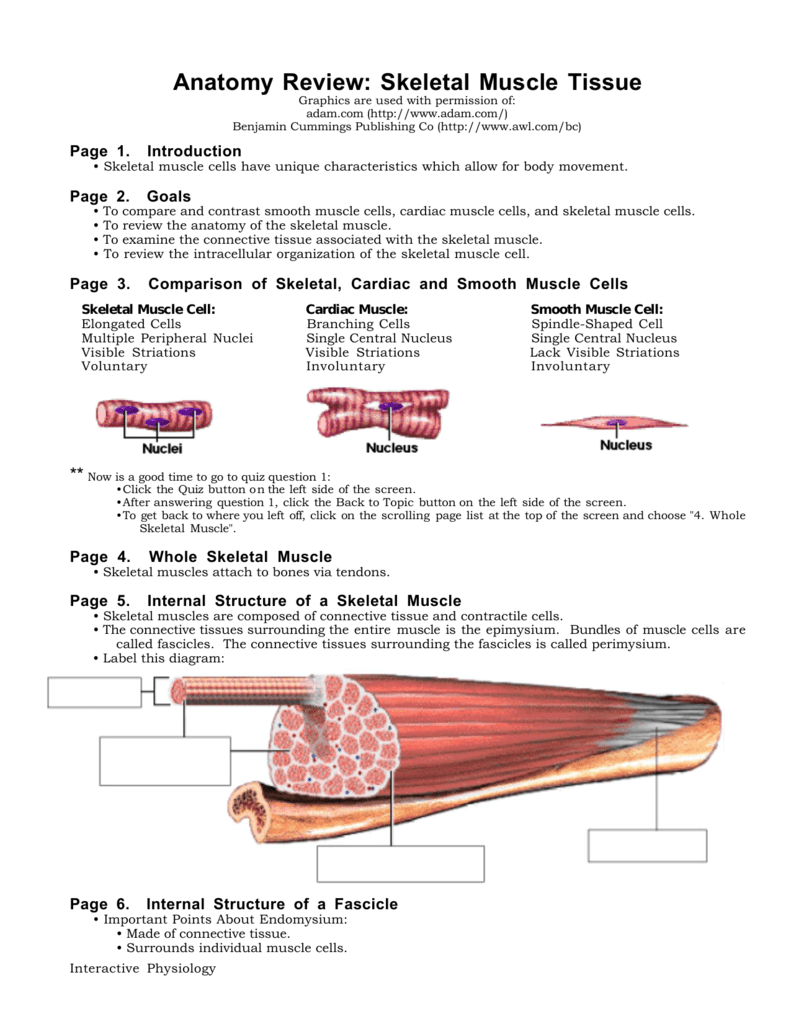 hight resolution of smooth tissue diagram