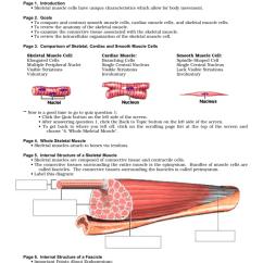 Cardiac Muscle Tissue Diagram Labeled Zama Carburetor Fuel Line Anatomy Review Skeletal