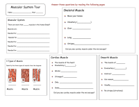 The Muscular System Worksheet Answers