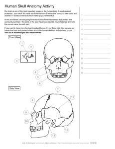 Human Skeleton Anatomy Activity