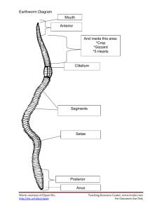 Activity: Earthworm Food Chain