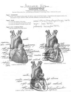 The Cardiac Cycle
