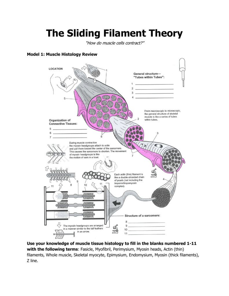 Sliding Filament Theory Sketch Coloring Page