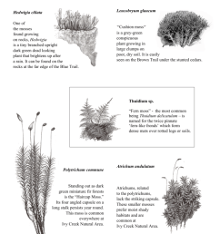 mosses and liverwort  [ 791 x 1024 Pixel ]