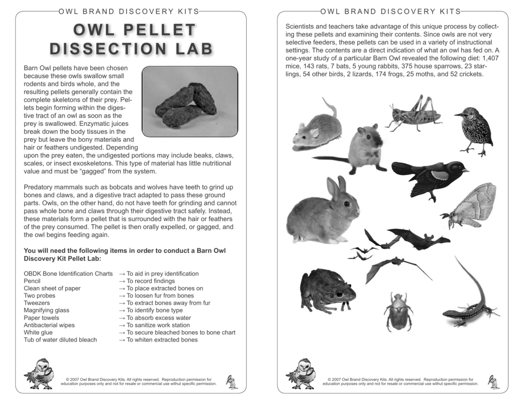 barn owl diagram ceiling pull switch wiring uk pellet bone chart parlo buenacocina co