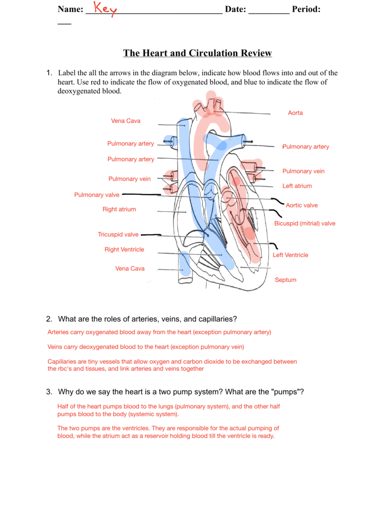 hight resolution of label the all the arrows in the diagram below indicate how blood flows into and out of the heart