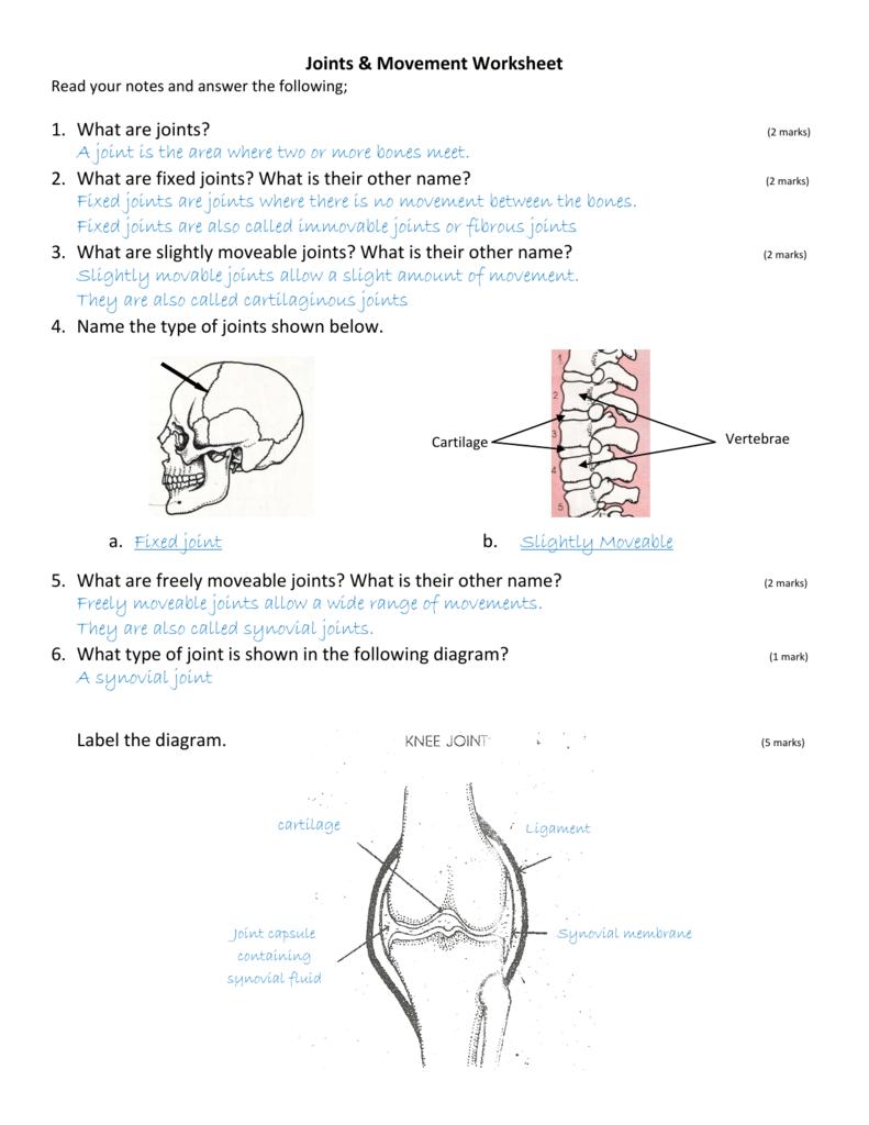 Joints Worksheet Grade 4 - DIY Worksheet