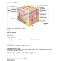 label a diagram of the skin mrs sanborn s science class skin cell diagram label [ 791 x 1024 Pixel ]