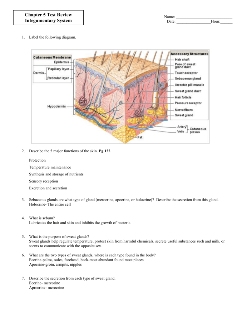 hight resolution of label a diagram of the skin mrs sanborn s science class skin cell diagram label