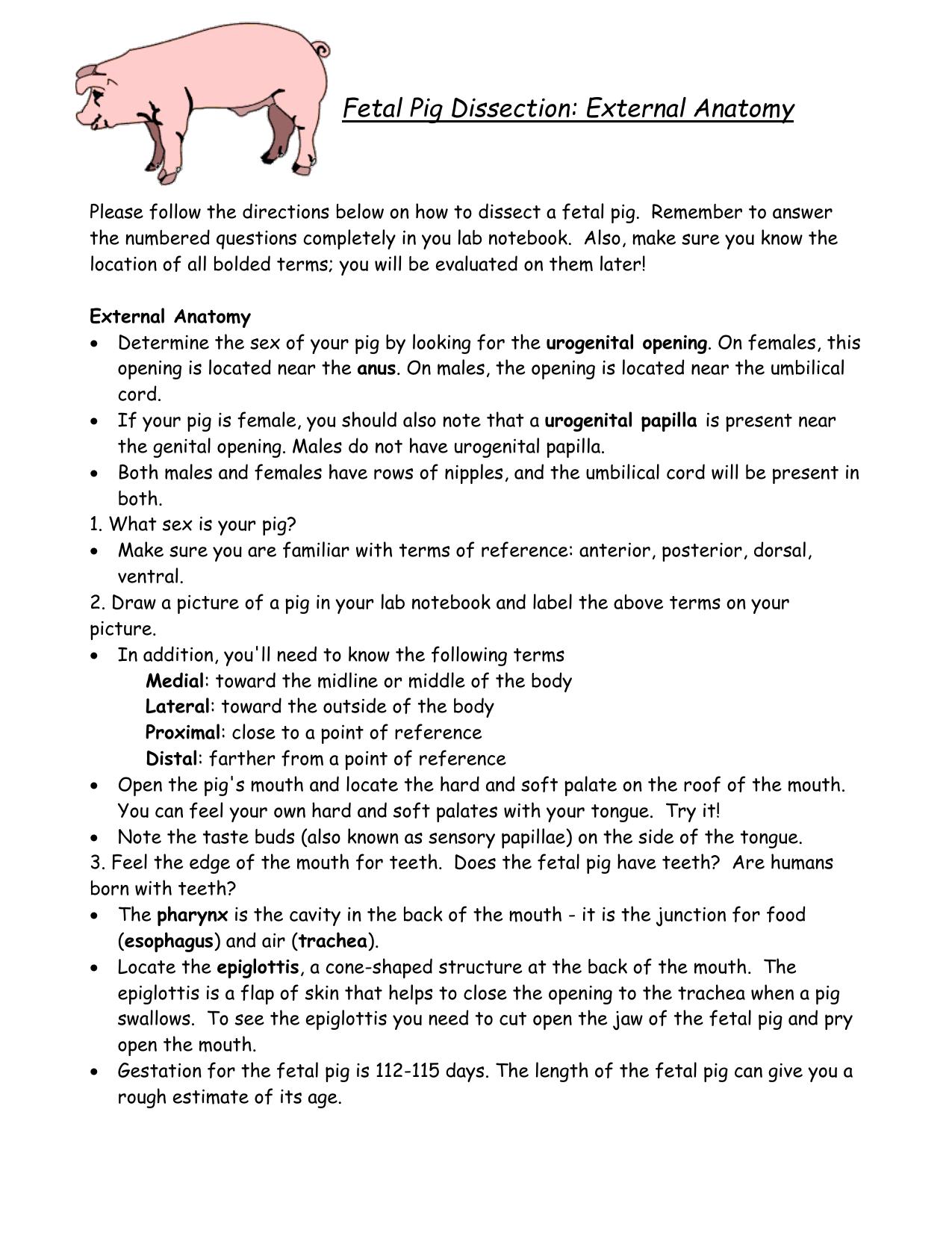 hight resolution of pig diagram worksheet