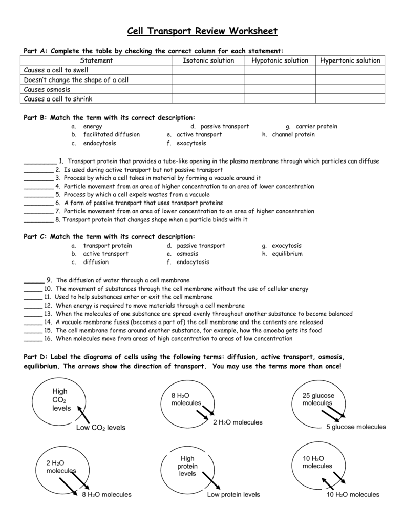 Newest Cell Review Worksheet Answers