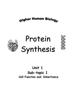 Unit 2 Genetics DNA and RNA Quiz Study Guide Ke