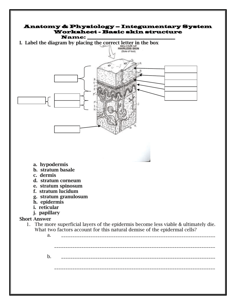 medium resolution of quiz 1 basic skin structure 1 point each i label the diagram by placing