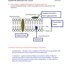 phospholipid bilayer cytosol cell diagram [ 791 x 1024 Pixel ]