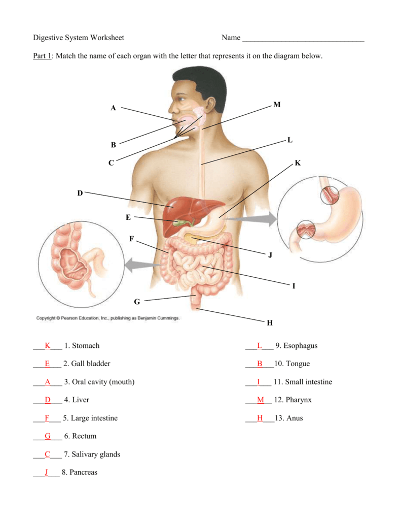 hight resolution of Anatomy Quiz – Digestive System