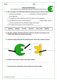Enzymes Worksheet - Geersc