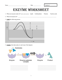 Enzyme Worksheet. Worksheets. Whenjewswerefunny Free ...